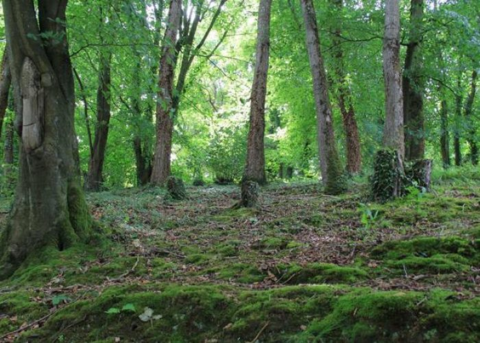 Profitez du cadre naturel des forêts de la région